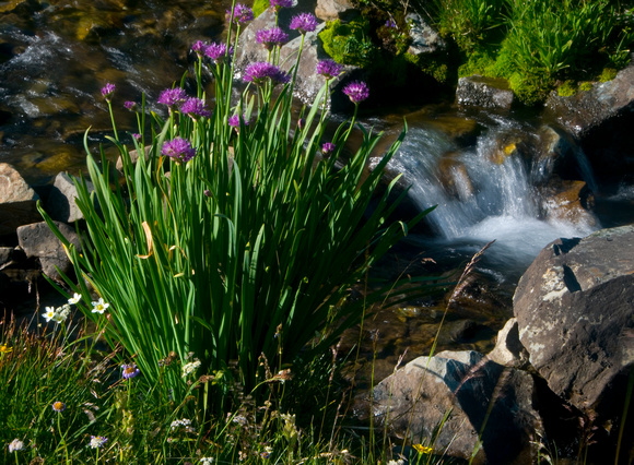Little Alpine Stream Tableau